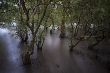 Mangroves 2B